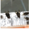 Thumbnail image for Cluster flies and Christmas lights