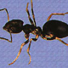 Thumbnail image for Don't let your ant inspections go in the tank (Inspection tips)