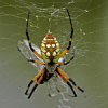 Thumbnail image for Why Do Spiders Shake?
