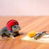 Thumbnail image for What Is The Best Bait For Mouse Traps?