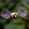 Thumbnail image for Homemade Carpenter Bee Traps