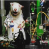 Thumbnail image for Are You A Pest Control Chemical Using Lab Rat?