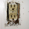 Thumbnail image for How To Deal With Ants In The Wall Sockets