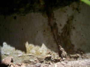 termite tunnel pestcemetery.com