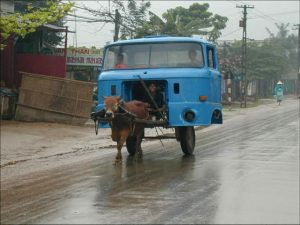 cow-pulling-truck pestcemetery.com
