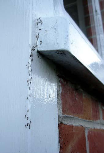 Ants In Pasadena Ca