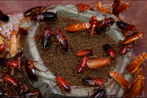 roaches in pet food http://pestcemetery.com/