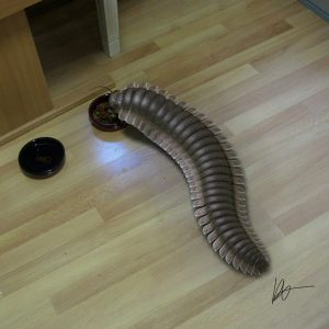 millipede in cat food pestcemetery 300x300 Pest proofing your pets food
