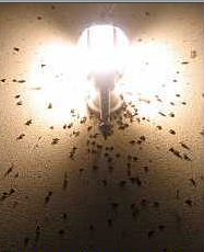 picture 32 Do yellow light bulbs really keep bugs away?