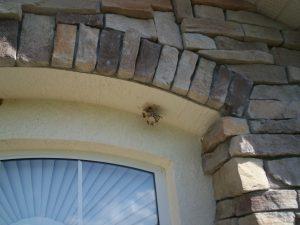 paper wasp nest pestcemetery.com