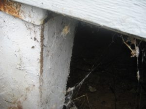 No shield on the skirting and a bent pier shield allowed termite access