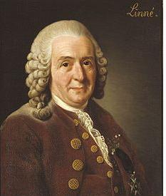 Carl Linnaues pestcemetery.com
