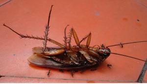 big dead roach pestcemetery.com