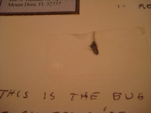 this is the bug pestcemetery.com