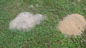 Granule treated mound with new mound on left