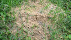 Fire ant mound cake