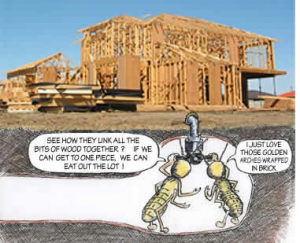 termite scoping house pestcemetery.com