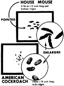 mouse poop vs. roach poop pestcemetery.com