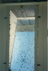 cluster flies on window pestcemetery.com