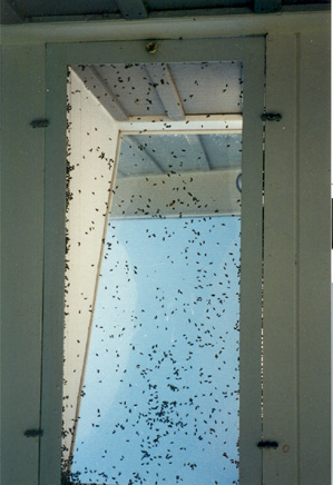 how to get rid of flies in window frames
