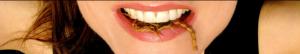 girl meets bug pestcemetery.com