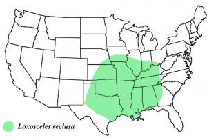 brown recluse map pestcemetery.com