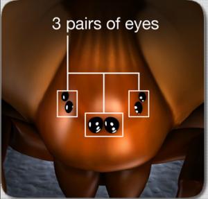 six eyes of recluse pestcemetery.com