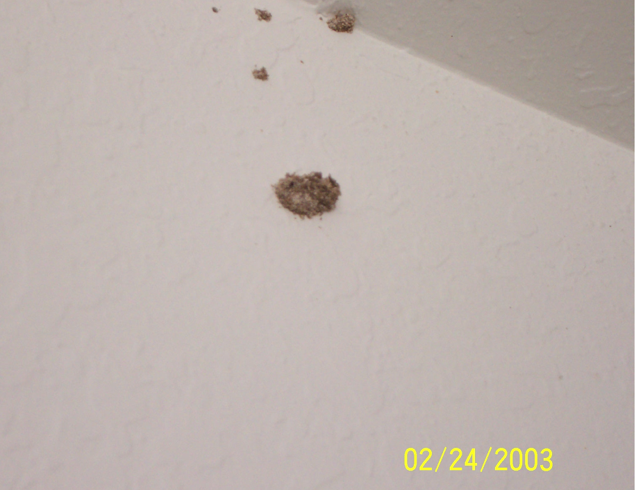Image Result For Termites In Ceiling Drywall