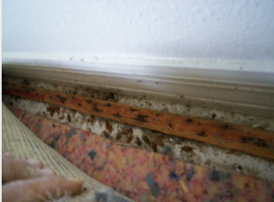 The Sin Of Treating Baseboards Pest Cemetery