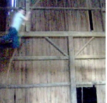 Post image for Rafter tag and bird control