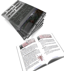 Spider Ebook Image Everything you wanted to know about the brown recluse but were afraid to ask
