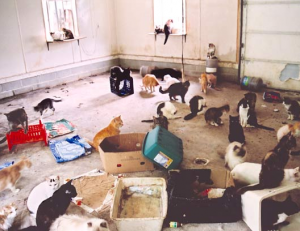 Picture 31 300x231 Hoarders & Pest Control; What Can You Do?