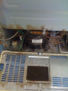 Ask The Bug Doctor About Roaches In Appliances Pest Cemetery