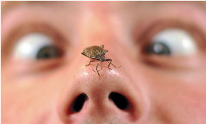 stink bug on nose http://pestcemetery.com/