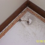 Why guess any longer where termites will pop up--our work provides unsuspecting entry that's easy to spot.