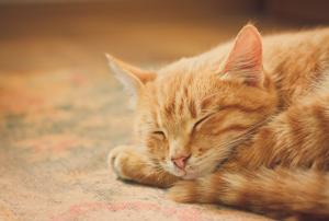 happy-cat http://pestcemetery.com/