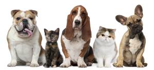 happy-pets http://pestcemetery.com/