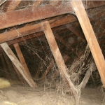 attic pest control http://pestcemetery.com/