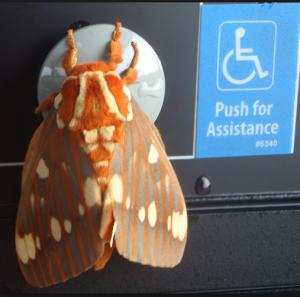 The Royal Walnut Moth http://pestcemetery.com/