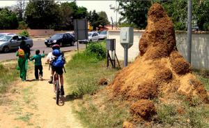 termite mound on sidewalk http://pestcemetery.com/
