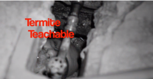 Termite Teachable moment htttp://pestcemetery.com/