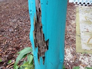 This porch post had THICK layers of paint slapped on it to try and hide the termites beneath.