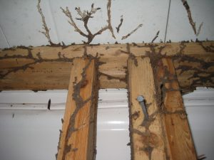 tunneling termites http://pestcemetery.com/