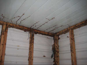All metal & vinyl siding shed. Well except for the studs ;)  The termites attacked those and tunnels go out in every direction looking for more food.