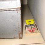 a rodent gauntlet http://pestcemetery.com/