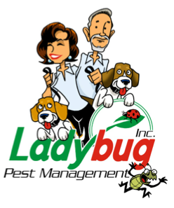 Ladybug pest management http://pestcemetery.com/